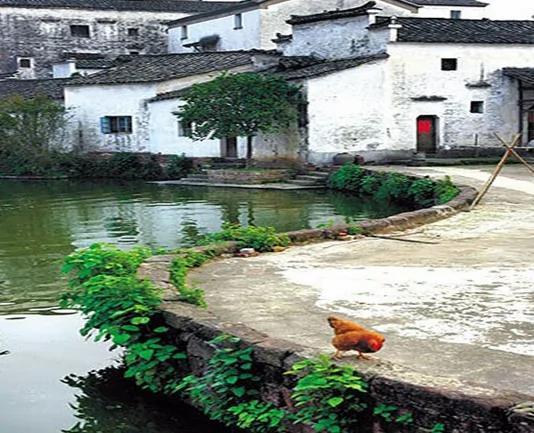 不可思議的中國「太極村」