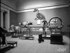 世界最佳博物馆珍贵旧照:从巨兽标本到月球模型