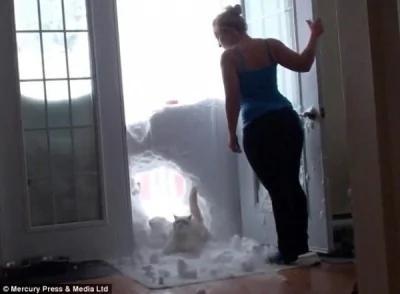 原来是这家人的猫听到主人敲碗声,迫不及待破墙而入。(图片撷取自每日邮报)