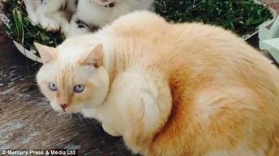"""主人说""""它就是只这么直来直往的猫""""。(图片撷取自每日邮报)"""