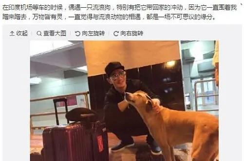 黄晓明机场偶遇流浪狗