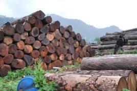 中国红木家具,东南亚森林的血腥浩劫 图
