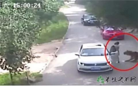 """北京""""老虎吃人""""事件:监控镜头外一个细节让人想哭 组图"""