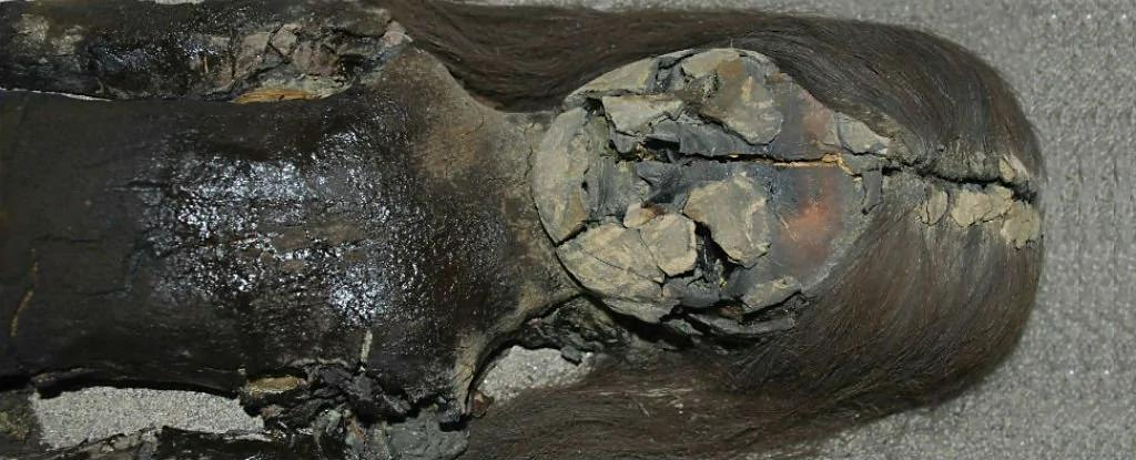 怪异!世界上最古老木乃伊在变成黑色液体 组图