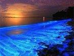 世界上最奇特的十大海滩 惊叹大自然的奇妙(图集)