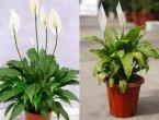 光照不足的窗台、阳台 你也能养好7种开花盆栽(图集)