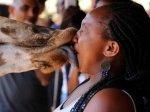 """长颈鹿这样""""强吻""""女游客"""