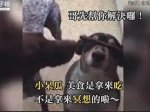 """毛孩发功练定力 却被""""它""""捷足先登!(图/视频)"""
