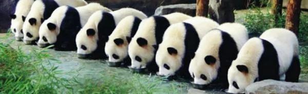 10年养死5只上海野生动物园回应
