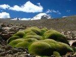 海拔6150米的高山发现超级植物(图)
