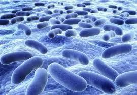 研究發現,中國1萬7000名腸道細菌感染樣本,1%具抗藥性基因。(網路圖片)
