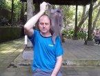 教训深刻!国外男游客抚摸小猴子被猴妈妈咬伤!(组图)