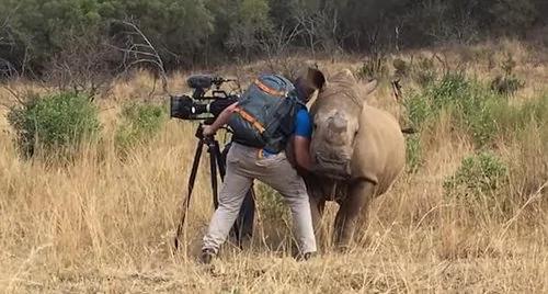 可爱!南非野犀牛接近摄影师请求为自己按摩肚子!
