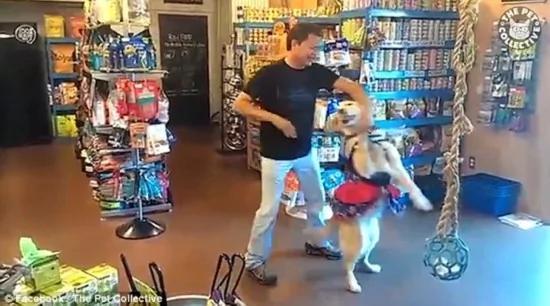 羡慕!智利男子在商店里与爱犬共舞 一人一狗配合默契 十分有爱!!