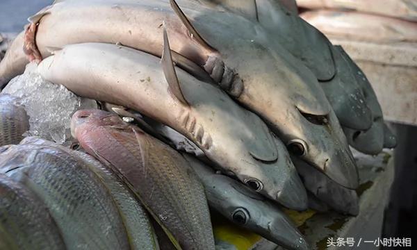 直击迪拜鲨鱼市场:土豪来这里整只买