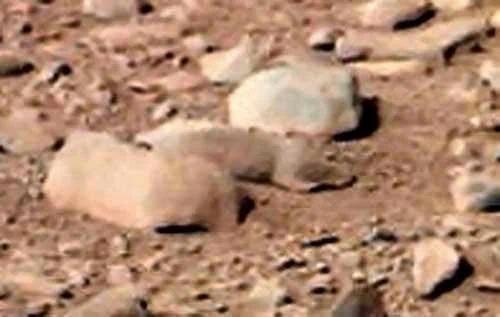外媒:火星上发现松鼠? NASA恐触犯了动物保护法