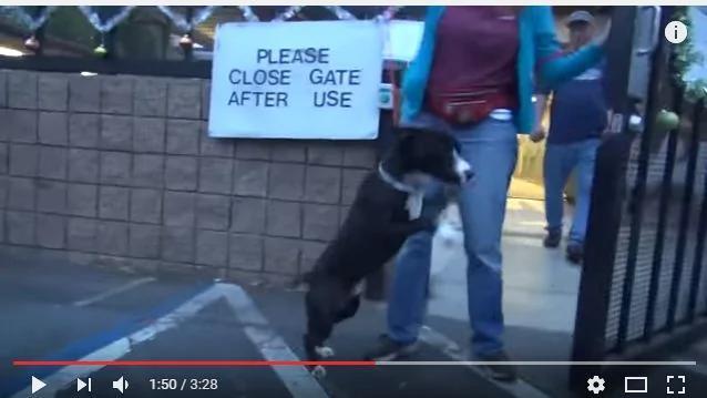 狗狗不敢相信被领养 激动的反应超戏剧化!