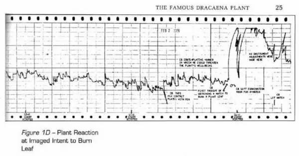 1966年2月2日,所记录的龙舌兰的突变折线