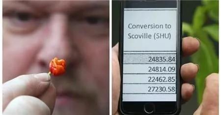 世界最辣辣椒誕生 其辣度竟高達248萬單位