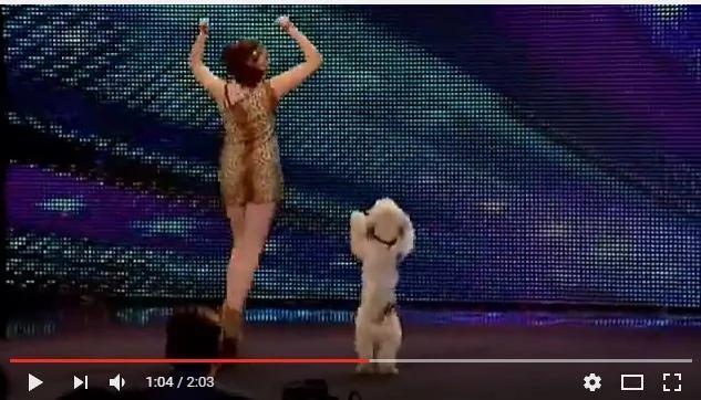 英国达人秀会跳舞的狗狗 太可爱了!