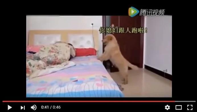 女主人带陌生男回家 小狗连忙通知男主人!(图/视频)