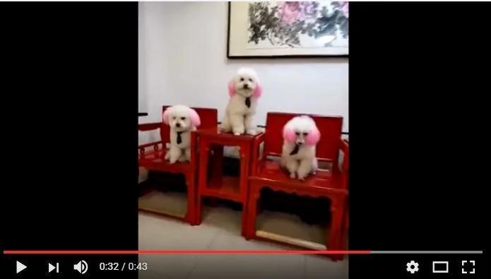 原谅我没见过世面 被这五只狗狗震撼到了 重点在17秒以后!