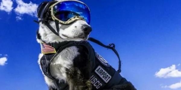机场工作犬超帅气!任务就是维护飞航安全!