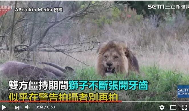 爆冲片!摄影师正面直击 狮王张牙怒冲镜头!难得一见哪!
