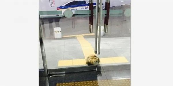 这只流浪猫因为天气太冷走进韩国釜山派出所取暖 让网友赞爆了!