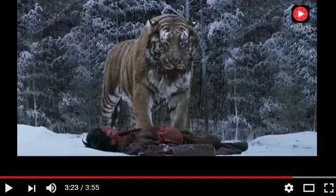 猎人放了小老虎 多年后老虎以这样的方式报恩 好感人!