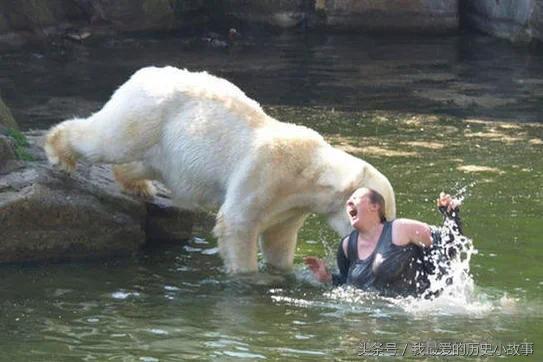 """直击动物袭击人类的""""惊险瞬间""""被抓拍"""