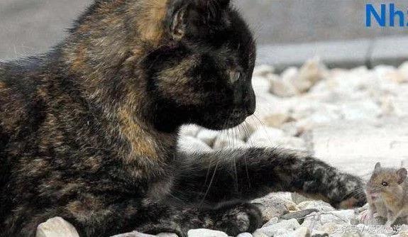 猫妈妈在给猫咪哺乳 竟有不速之客混进来蹭奶喝 原来是…