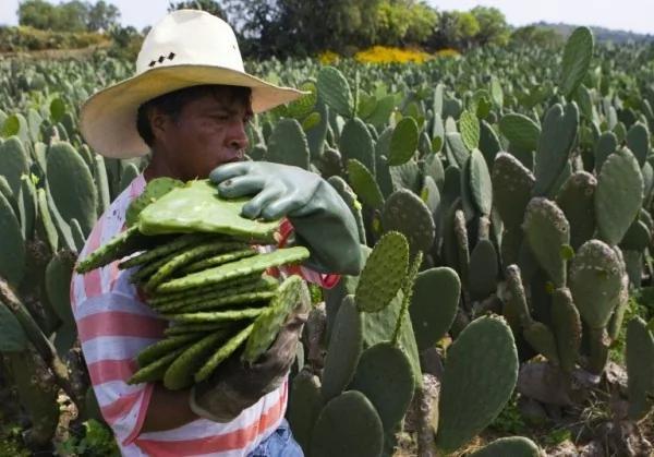 全球面临粮食危机 联合国:秘密武器是吃这个 …
