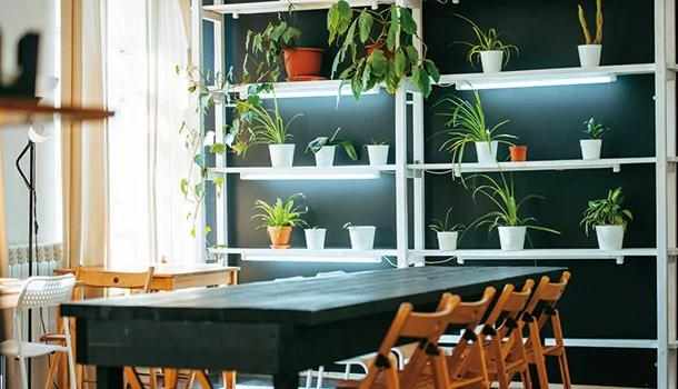 天然空气清净机/选对室内盆栽帮你排毒