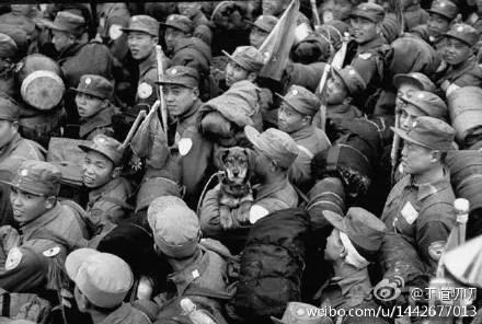 【揭秘】志愿军战俘的一只狗 随去台湾 双枪老太婆居中 同框周恩来老婆只有靠边站